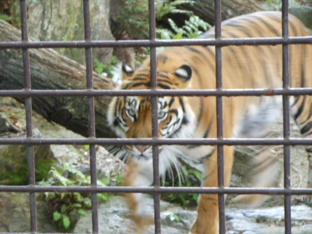 5.5の動物園 132