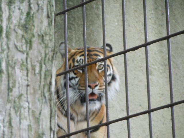 5.5の動物園 135