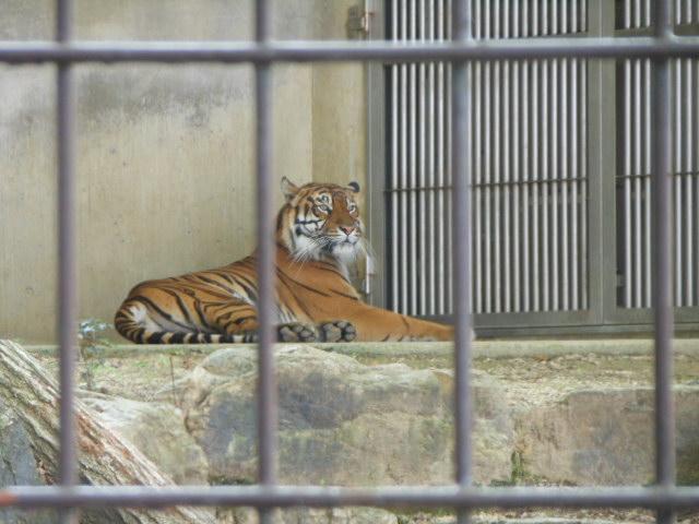5.5の動物園 133