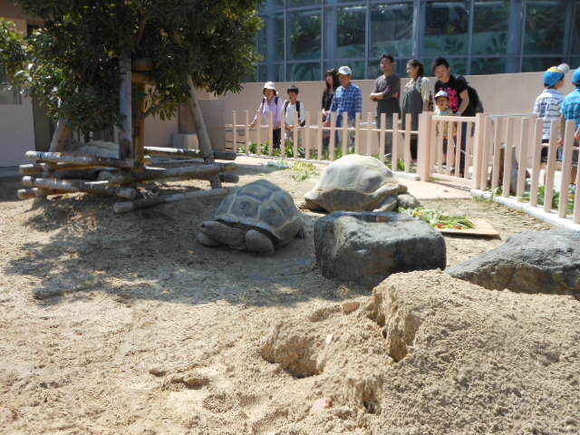 5.5の動物園 035