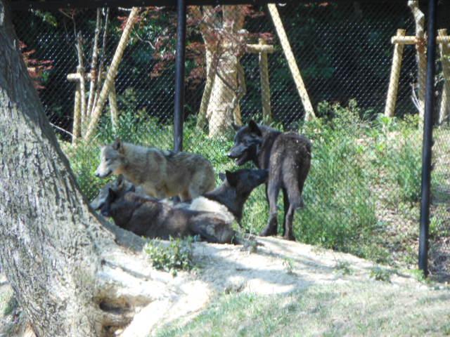 5.5の動物園 047