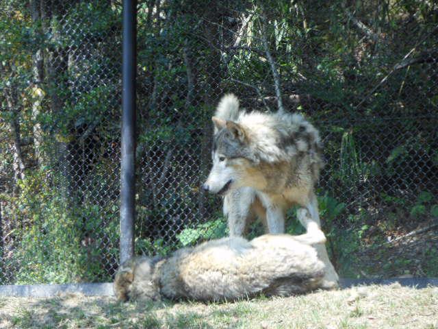 5.5の動物園 061