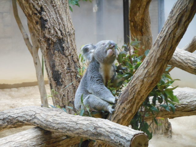 5.5の動物園 172