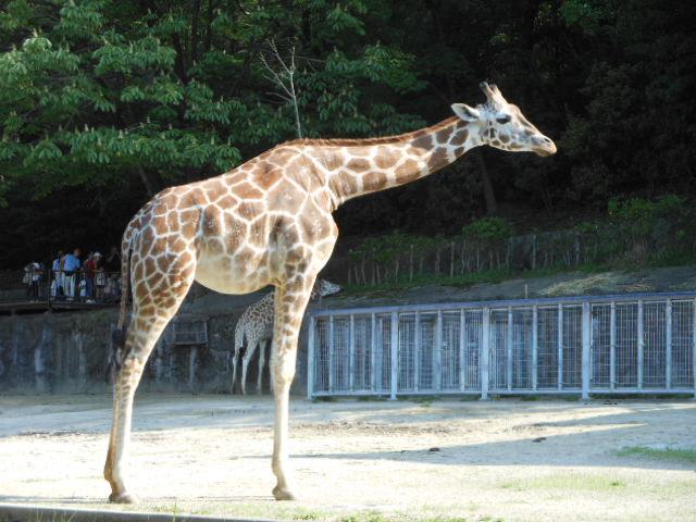 5.5の動物園 130