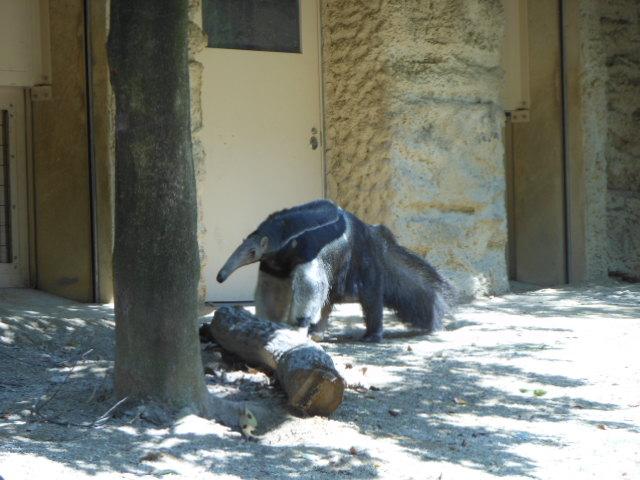 5.5の動物園 022