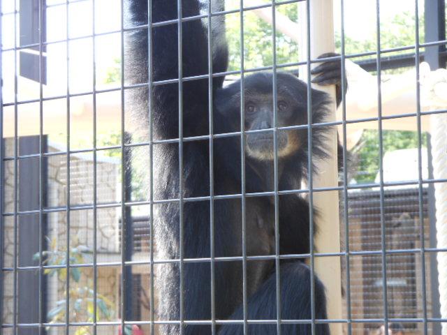 5.5の動物園 108