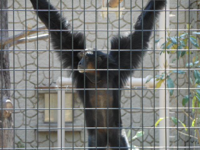 5.5の動物園 103