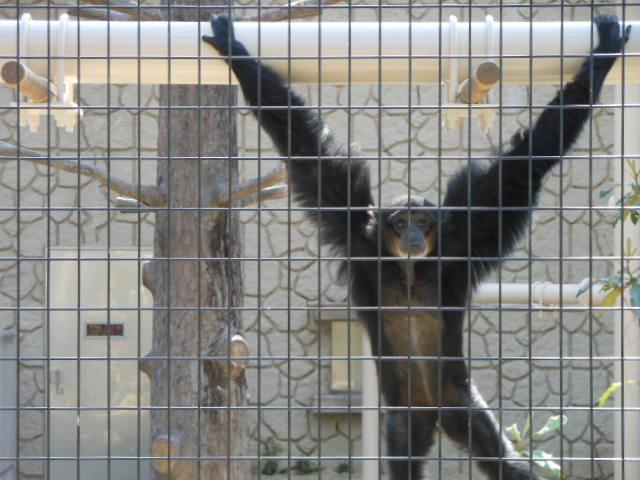 5.5の動物園 104