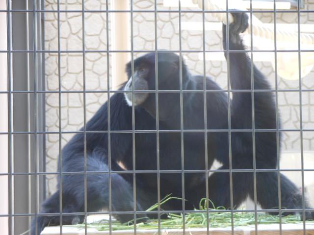 5.5の動物園 105