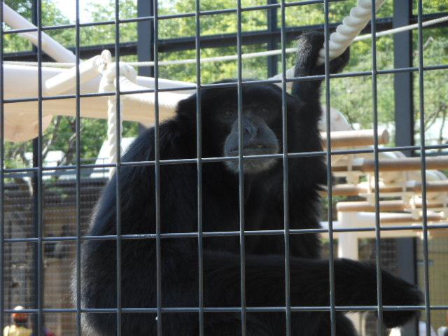 5.5の動物園 106