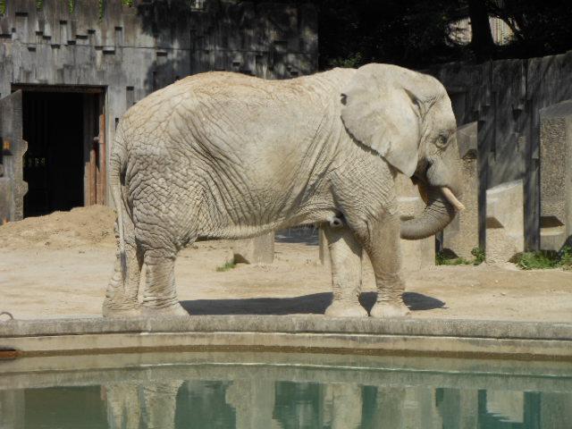 5.5の動物園 109