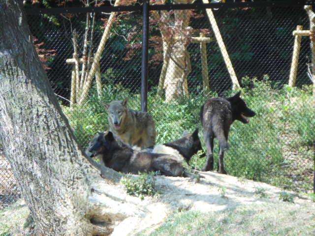 5.5の動物園 048