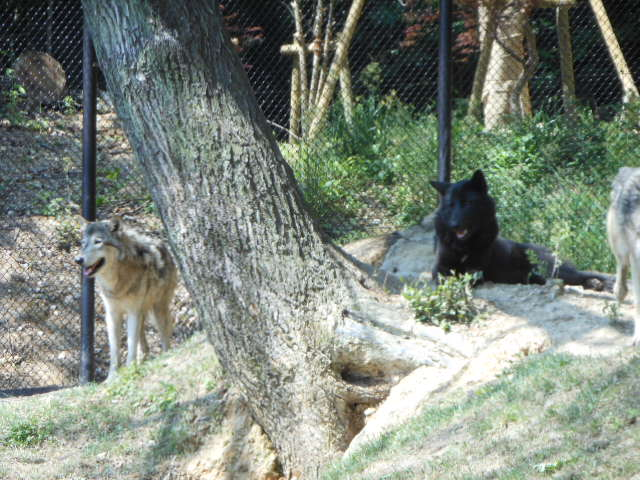 5.5の動物園 059