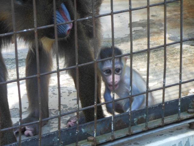 真夏の動物 239