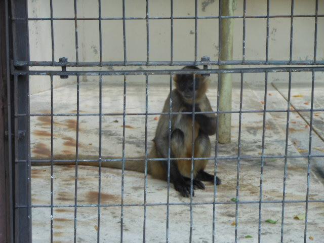 真夏の動物 227