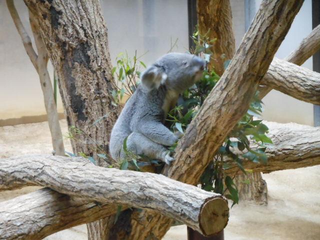 5.5の動物園 168