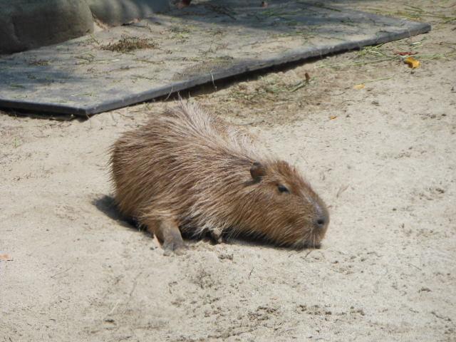 真夏の動物 123