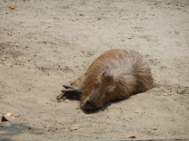 真夏の動物 128