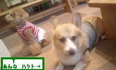 kisei@20120814hkt-an.jpg