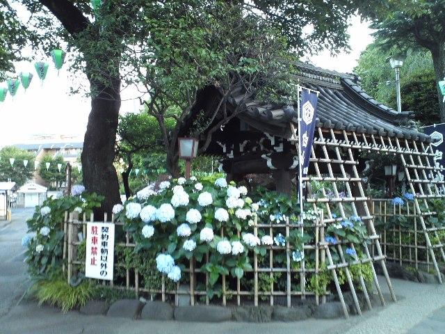 hakusan8_wb.jpg