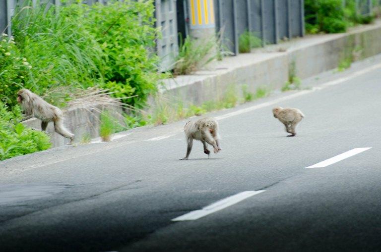 20120630-野猿2
