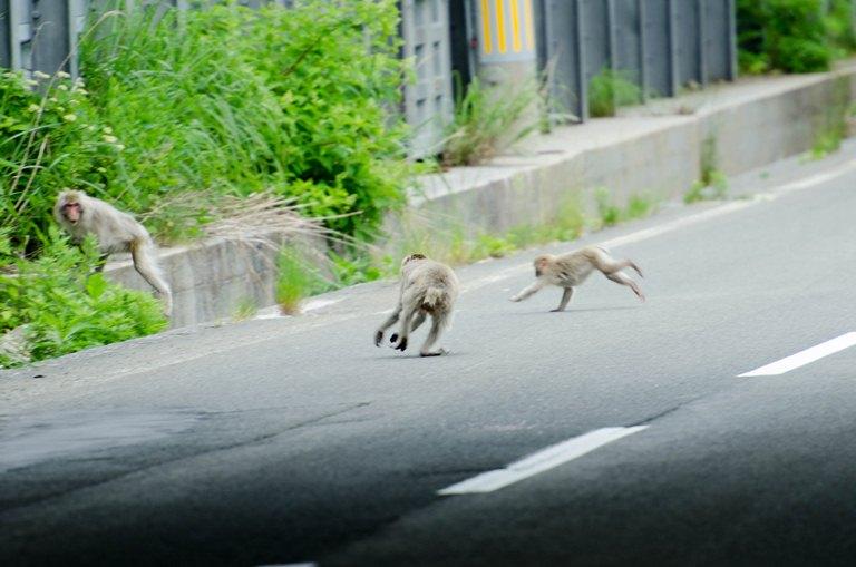 20120630-野猿3