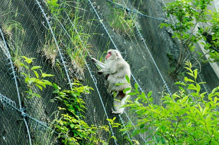 20120630-野猿1
