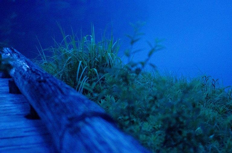 20120722-蔦沼