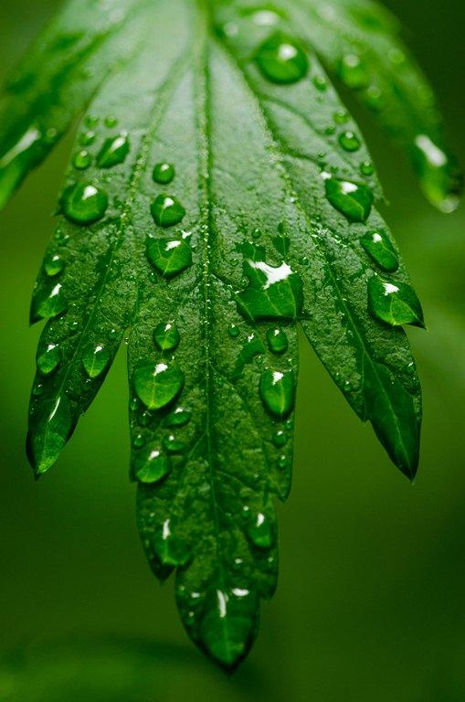 20120721-雨あがり2