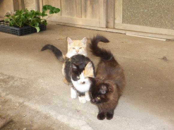 Sさん家の仔猫ちゃんたち