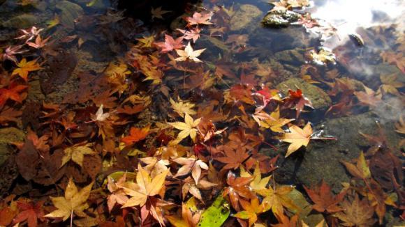 川の落ち葉
