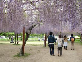 様々な組み合わせの花見客で賑わっていました