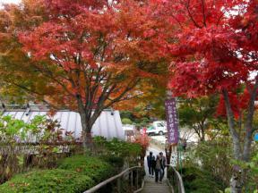花見庵への階段と紅葉