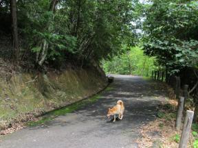 遊歩道をサクラちゃんと散策中