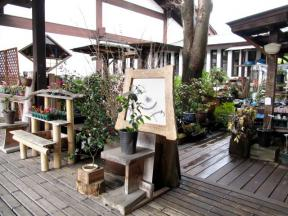 中庭で展示されている鉢植え達