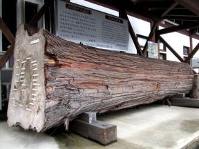 茅部神社の神木