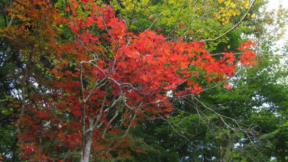 もみじの散歩道の紅葉 その1