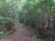 雑木林の遊歩道