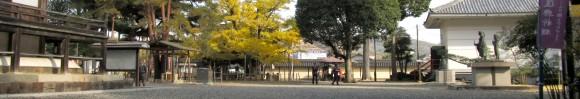 誕生寺の逆木の公孫樹