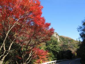 県道沿いの紅葉