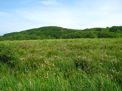釧路湿原7月