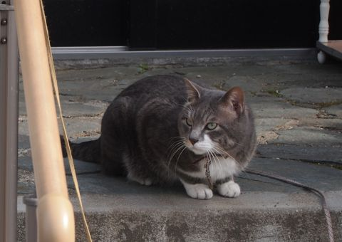 元町のネコ