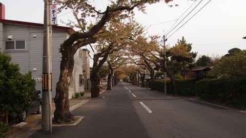 桜ヶ丘通り