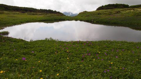 お花畑と池塘