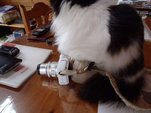 カメラケースが好きなクークー