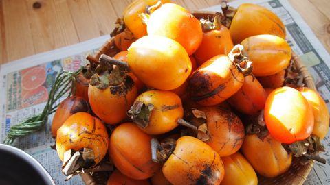 干し柿用の柿