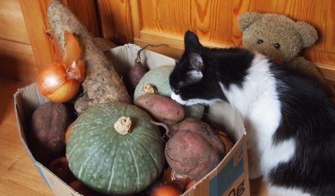 野菜もらった