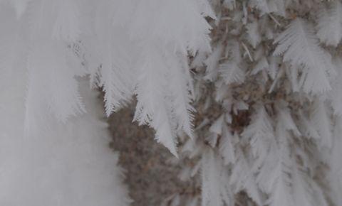 樹氷のアップ