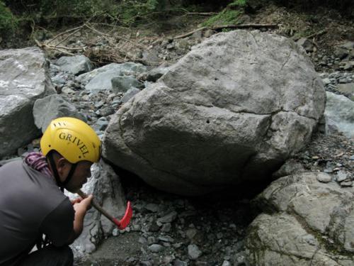 青サンゴ化石147