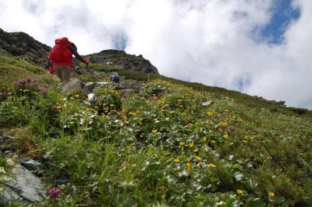 74北岳のお花畑